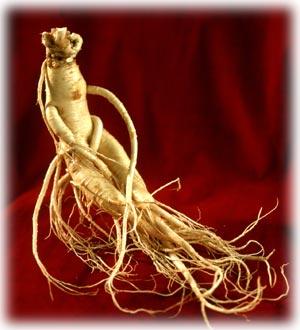 Una investigación canadiense da a conocer los productos naturales con efectos afrodisíacos alimentacion y nutricion